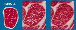 Imagem e fotos ilustrando BMS 4